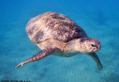 Sea turtle Egypt