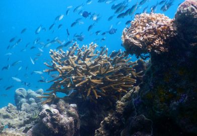Shark island - Underwater life