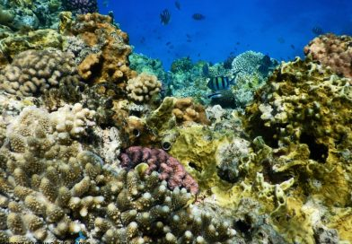 Sharm Egypt colorful corals