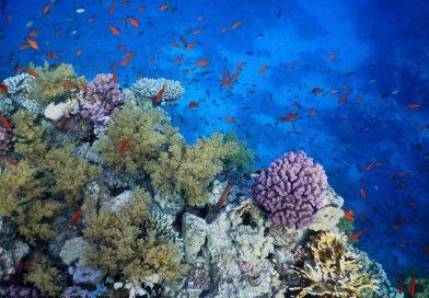 Sharm El Sheikh - Faraana snorkeling