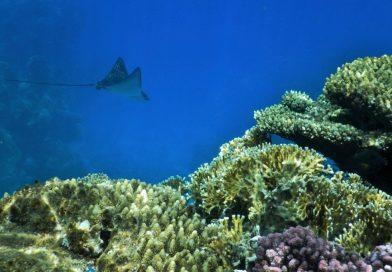 Sharm El Sheikh - Ras Kathy snorkeling trip