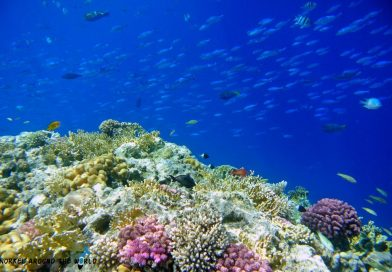 Sharm El Sheikh - Ras Kathy snorkelling