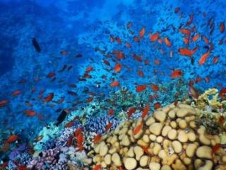 Sharm El Sheikh - Ras Um Sid coral