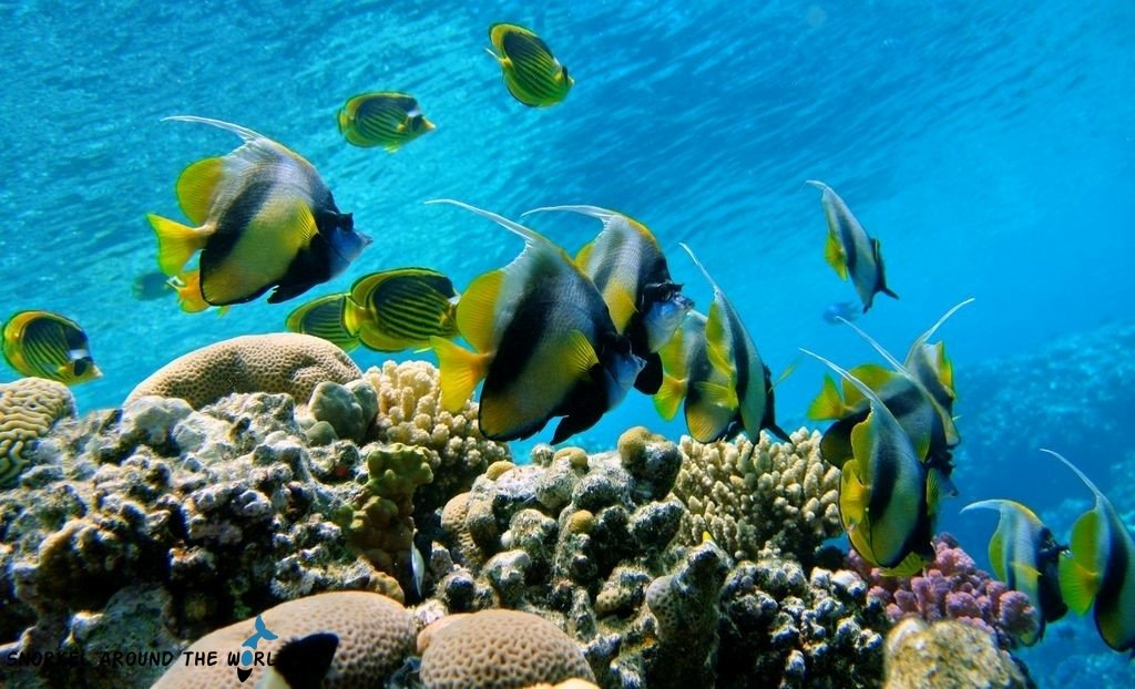 Sharm El Sheikh - Rasumsid coral reef