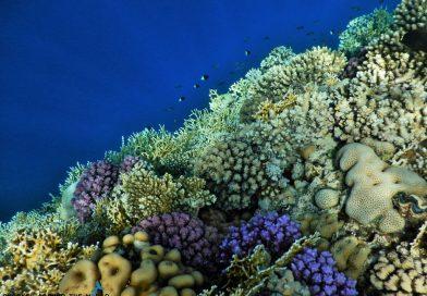 Sharm El Sheikh - Ras um sid coral reef