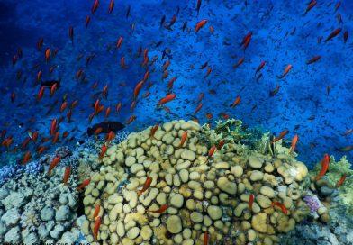 Sharm El Sheikh - Shore snorkeling