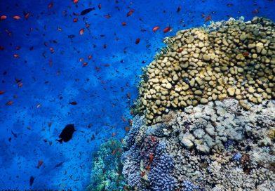 Sharm El Sheikh - Temple Reef corals