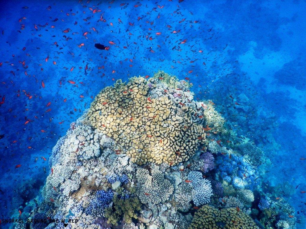 Sharm El Sheikh - Temple Reef snorkel