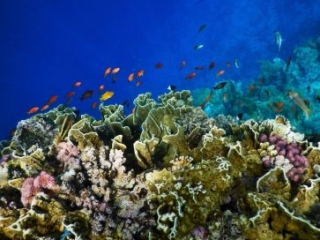 Sharm El Sheikh best coral reef