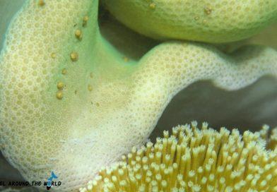 Sharm El Sheikh - corals