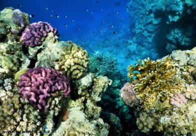 Sharm El Sheikh - snorkeling