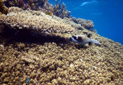 Sharm el Sheikh - Coral