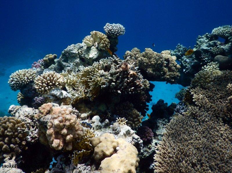 Sharm el Sheikh - Ras Bob Coral