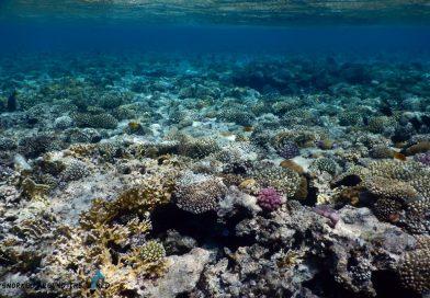 Ras Bob - Coralgarden Sharm el Sheikh