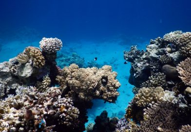 Sharm el Sheikh - Ras Bob Corals