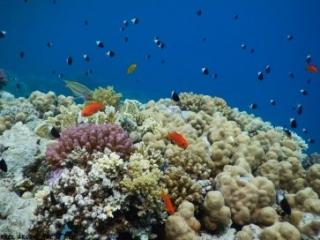 Sharm el Sheikh Ras Ghamila - Snorkeling