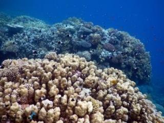 Ras Ghamila - Snorkelling