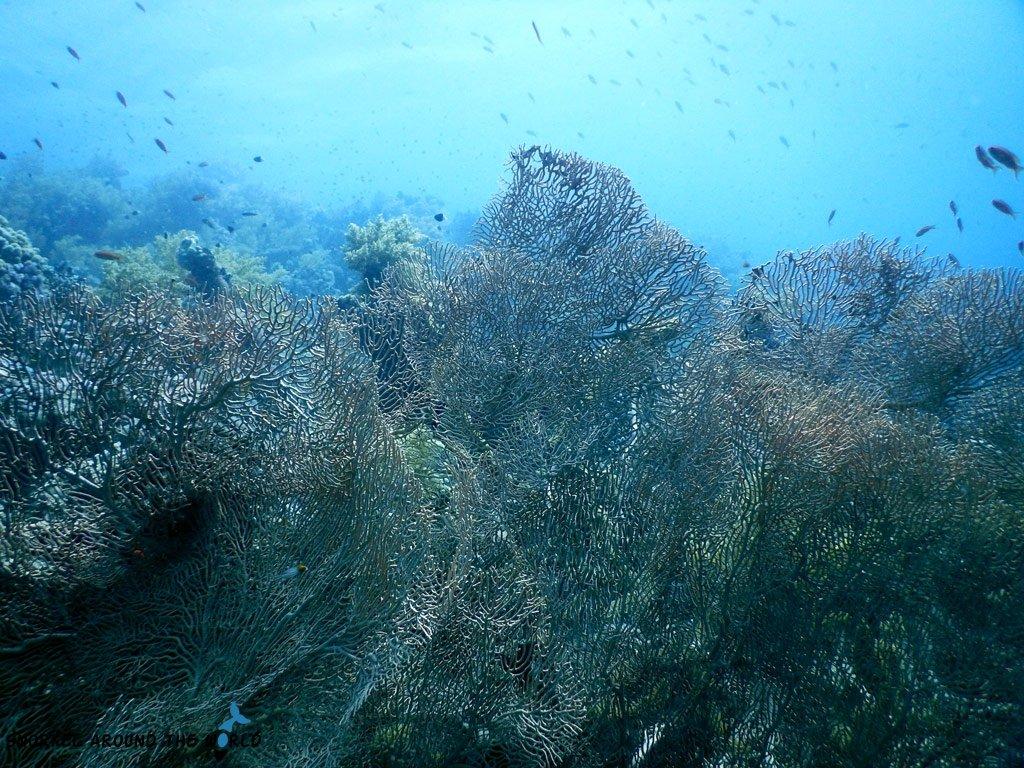 Sharm el Sheikh - Ras Nasrani - Red Sea Coral reef 18m