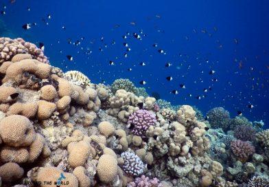 Sharm el Sheikh - Ras Ghamila fish