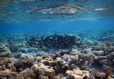 Sharm el Sheikh marine life