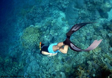 Sharm el Sheikh Ras Nasrani Freediving Egypt