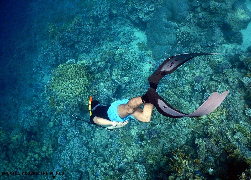 Sharm el Sheikh Ras Nasrani Freediving Egypt