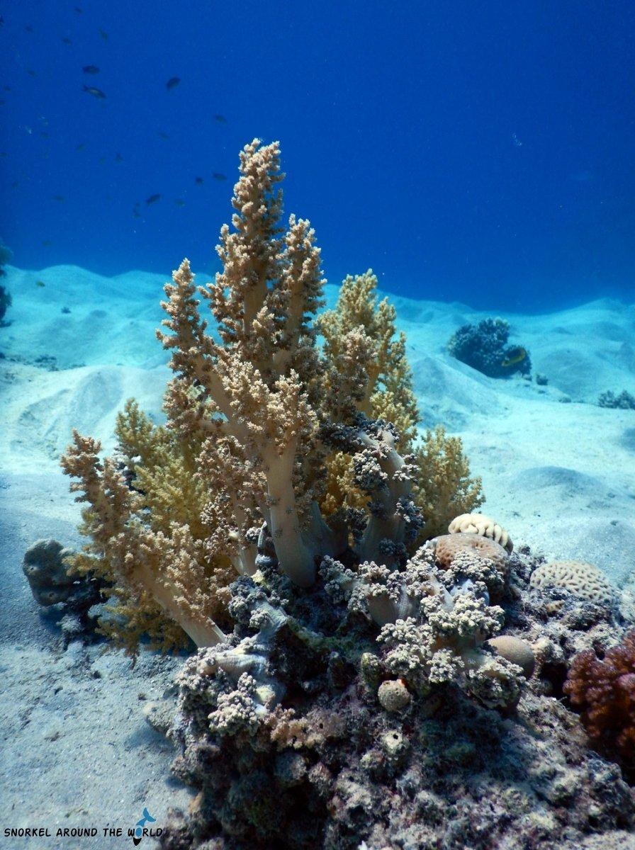 Sharm el Sheikh underwater photo