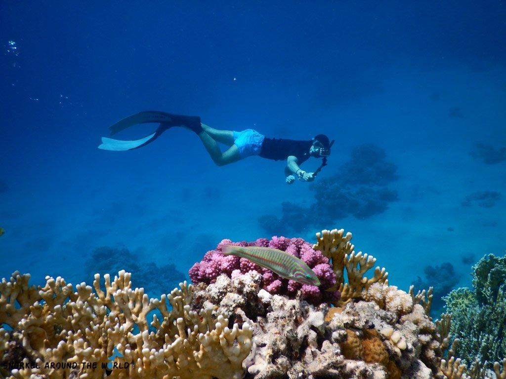 Sharm el Sheikh water temperature