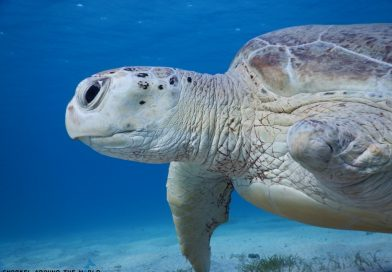 Snorkeling with turtle - Egypt