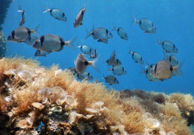 Underwater Malta - Fish