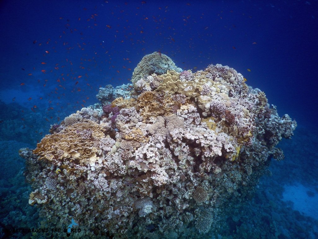 Underwater photo - Red Sea