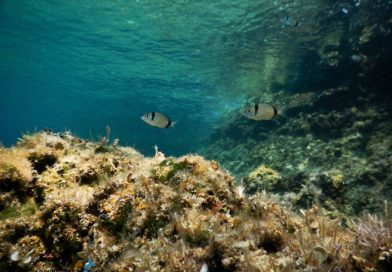 What to see in Krk underwater