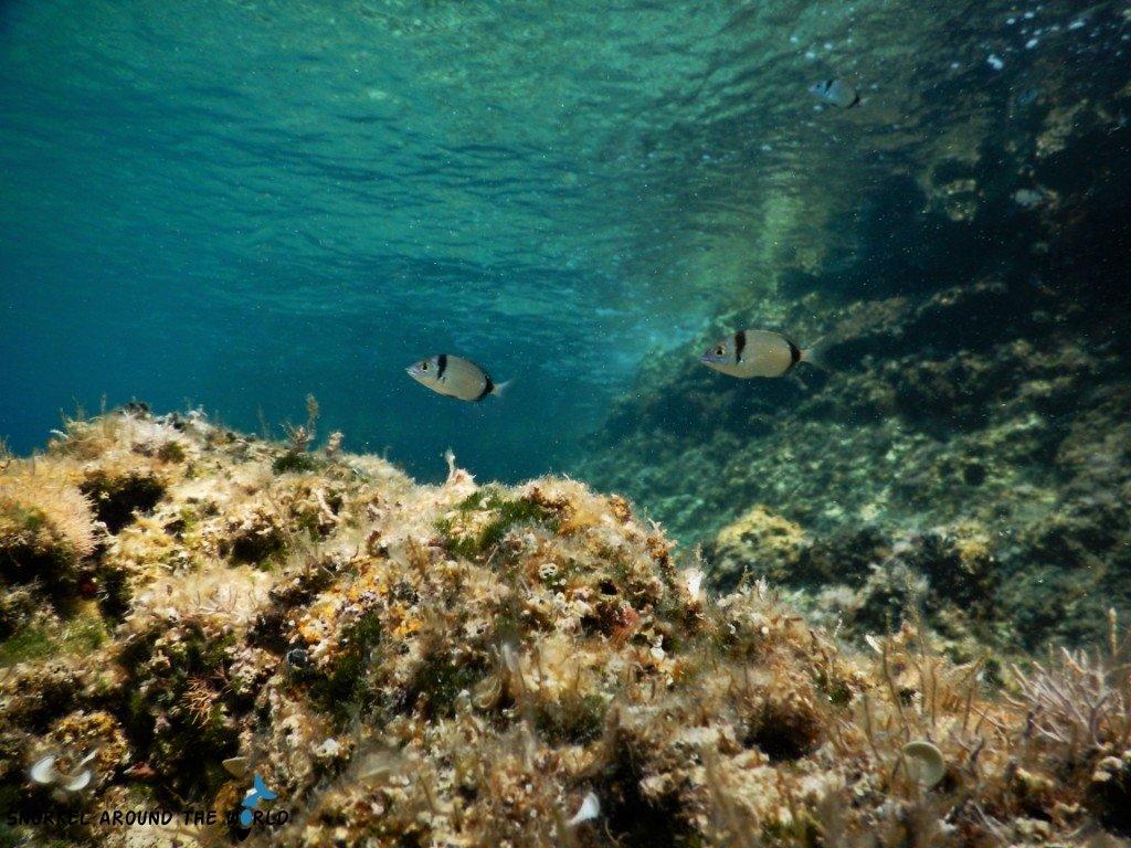 What to see in Krk underwater