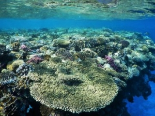 Best coral reefs in the world
