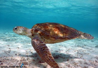 Biyadhoo Turtle