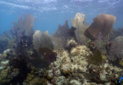 Cancununderwatermuseum - Coral
