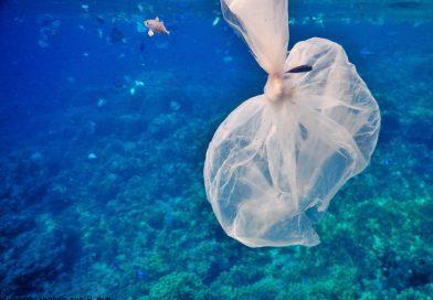 Clean the Sea - Plastic