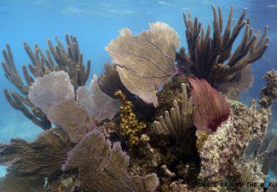 Coral - Underwatermuseum