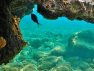 Fish in the Adria