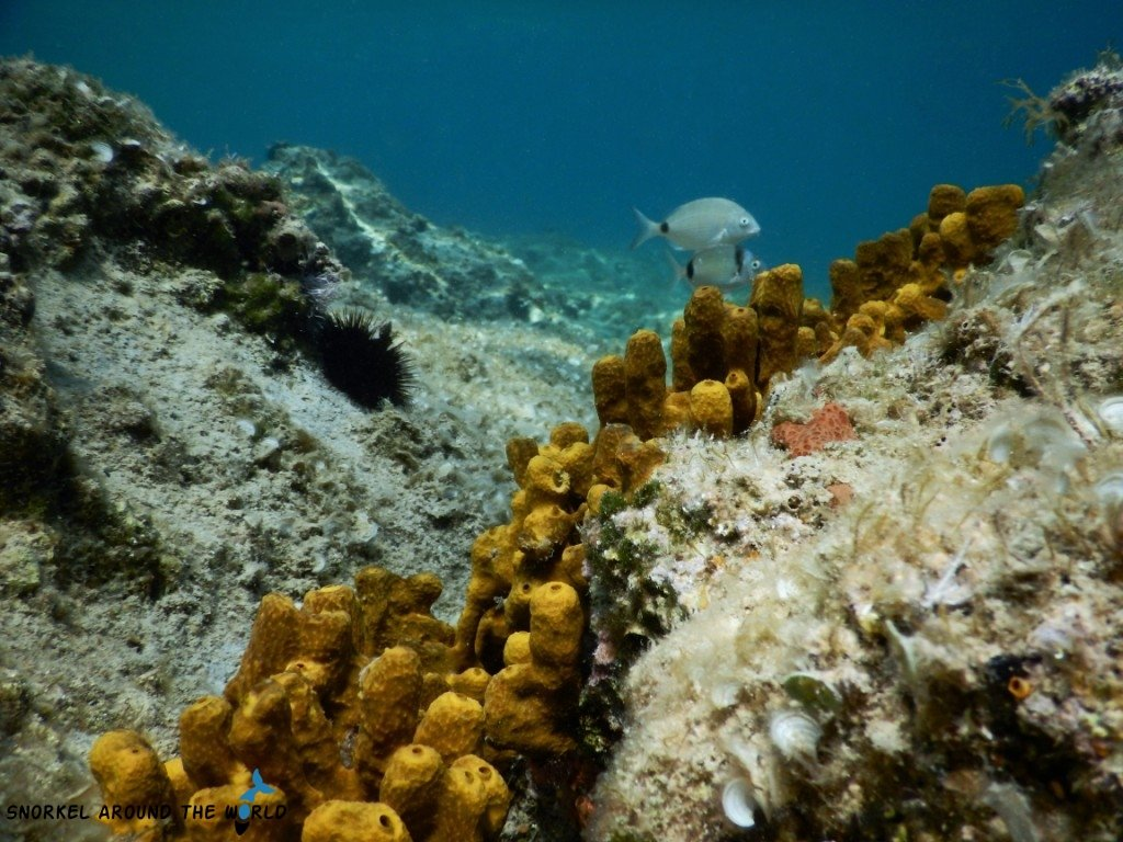 Krk island - Coral in the sea