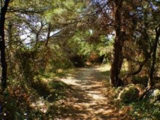 Krk karaka path in the forest
