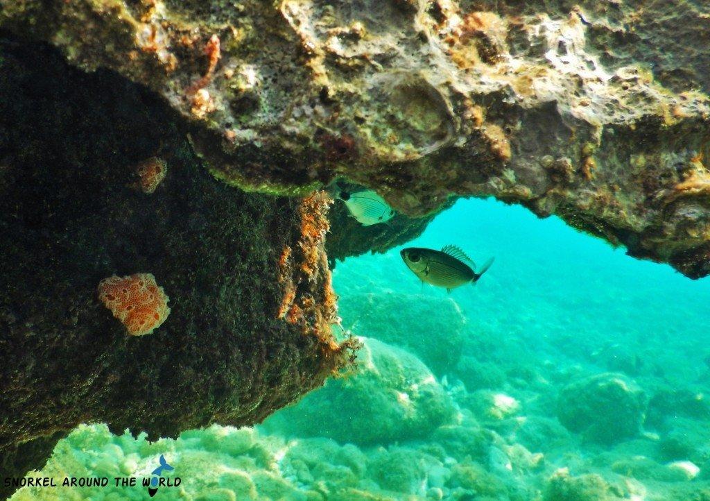 Snorkeling in the Adriatic Sea