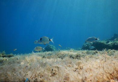 Underwater croatia