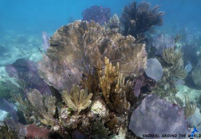 Underwatermuseum Snorkeling
