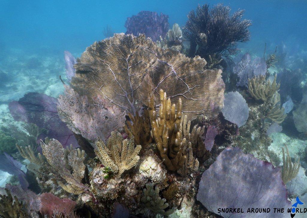 Underwater museum Snorkeling