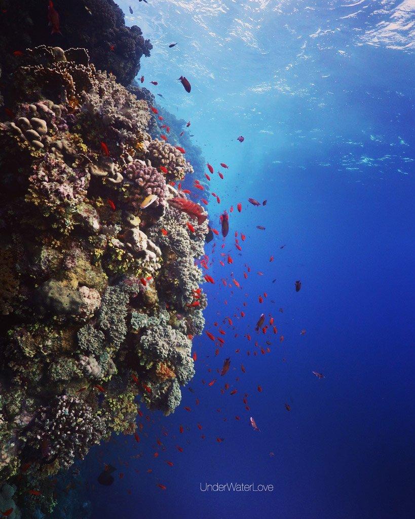 UnderWaterLove-coralgarden