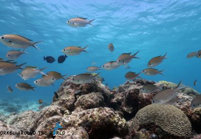 Aruba - Arashi snorkeling