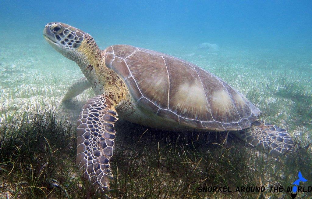 Akumal Mexico - Turtle