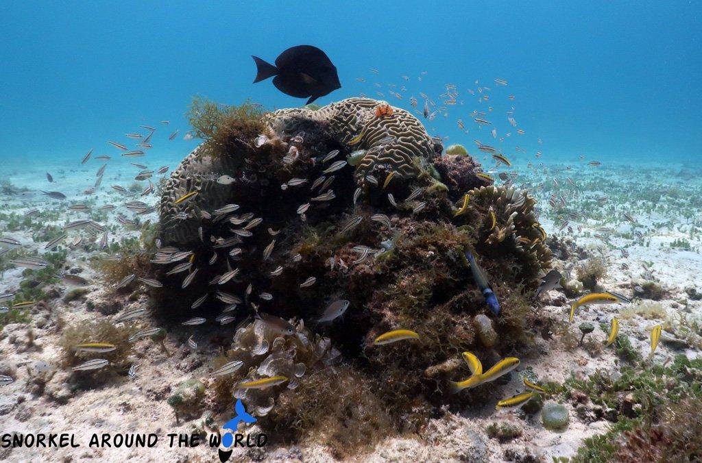 Catalinacove - Aruba