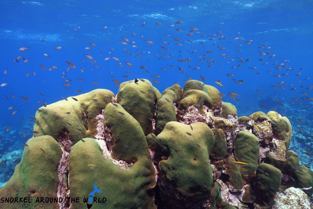 Aruba snorkeling trip - coral
